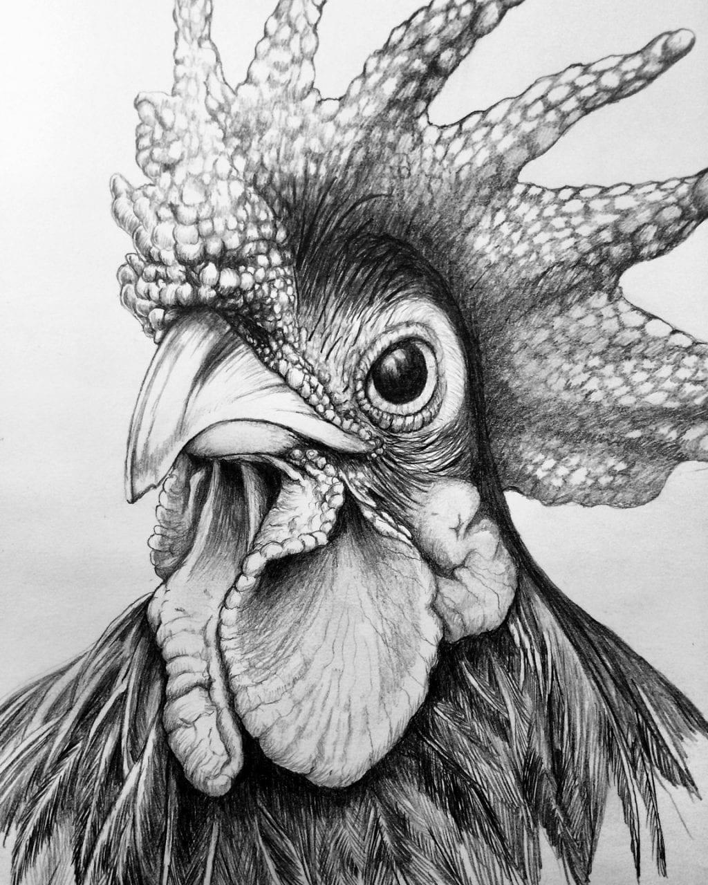 Rooster Zeichnung